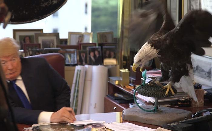 Donald Trump es atacado por un águila calva llamada Tío Sam