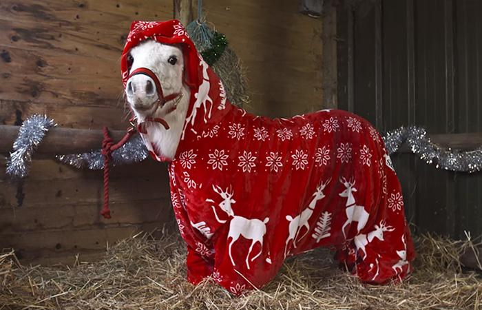Foursie: Este mono festivo para ponis los mantiene calentitos
