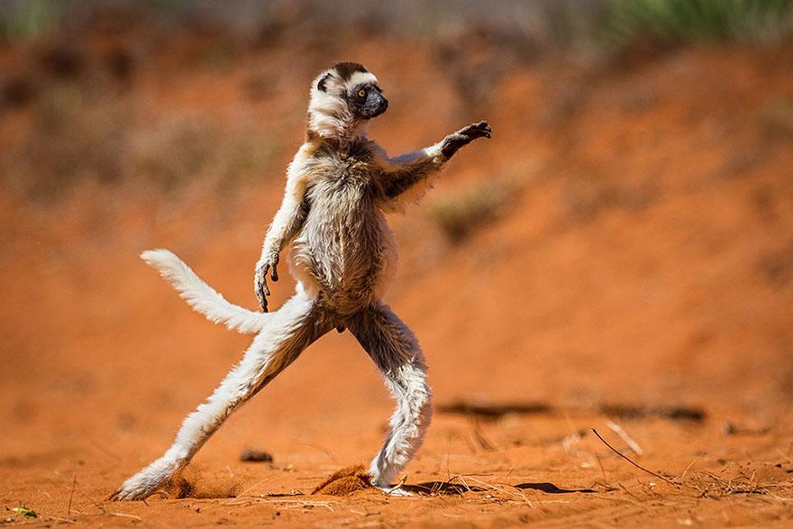 ganadores-premios-fotogradia-comedy-wildlife-2015 (3)