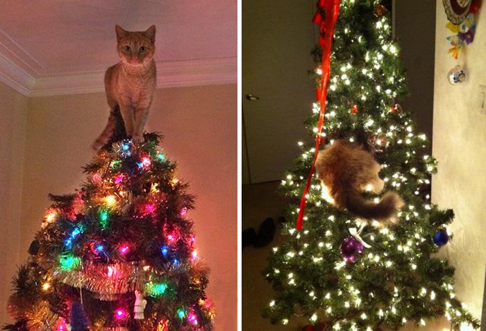 15 Gatos Ayudando A Decorar El árbol De Navidad Bored Panda