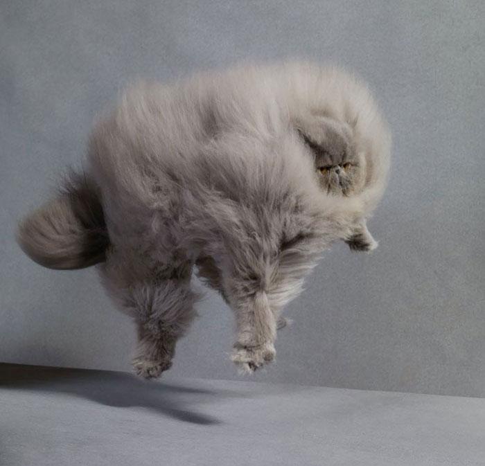 gatos-peludos-esponjosos (20)