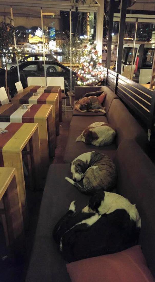 Esta cafetería permite que los perros callejeros duerman en su interior por las noches tras irse los clientes