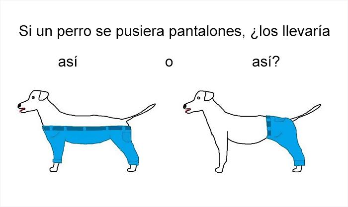 Es la hora de las preguntas serias: ¿Cómo llevaría pantalones un perro?