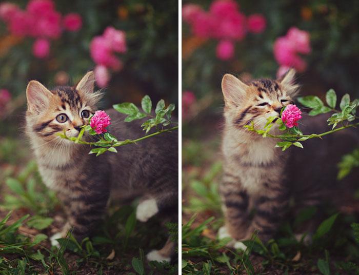 15 Animales adorables mientras huelen flores