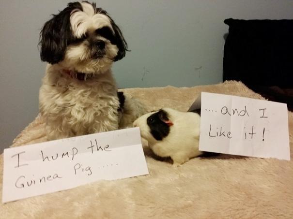 castigo-avergonzar-duos-animales (12)