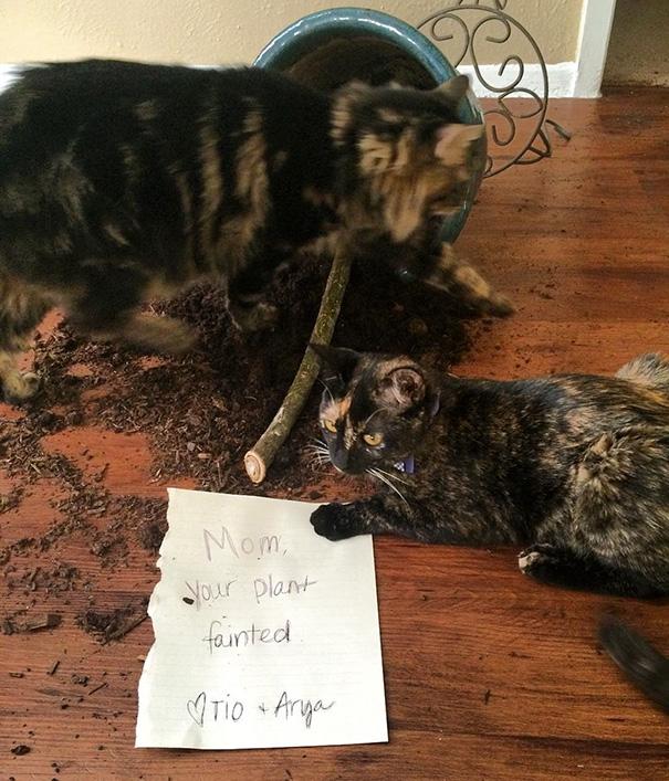 castigo-avergonzar-duos-animales (17)