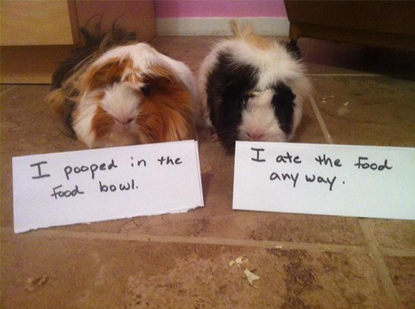 castigo-avergonzar-duos-animales (4)
