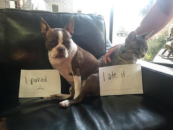 castigo-avergonzar-duos-animales (5)