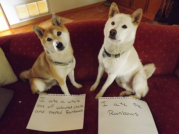castigo-avergonzar-duos-animales (6)