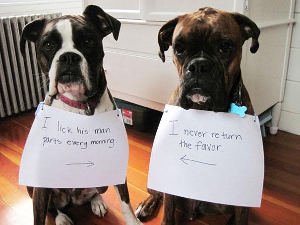 castigo-avergonzar-duos-animales (8)