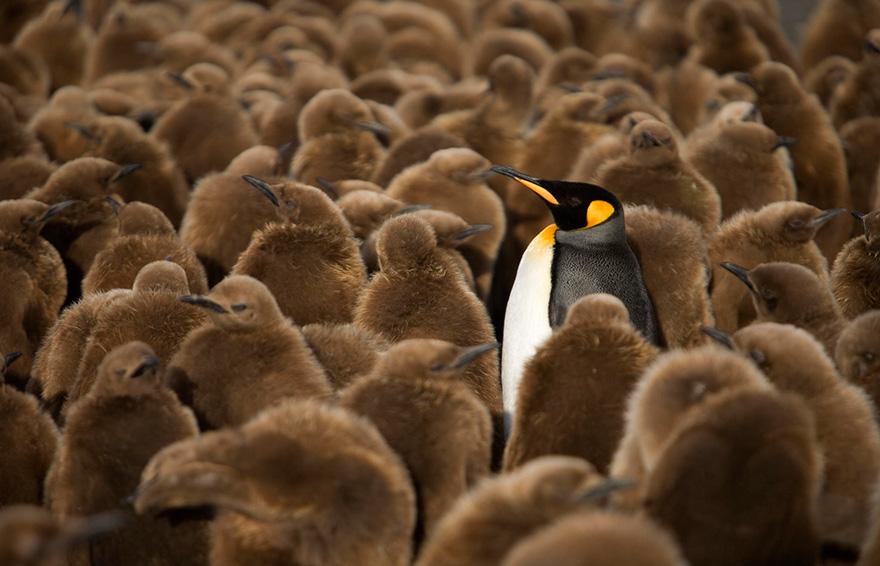 dia-concienciacion-pinguinos (2)