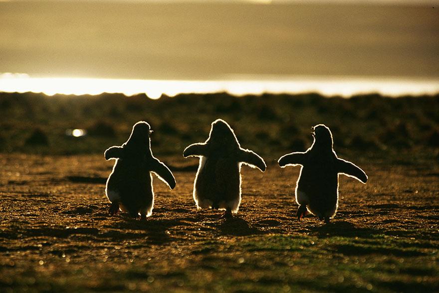 dia-concienciacion-pinguinos (4)