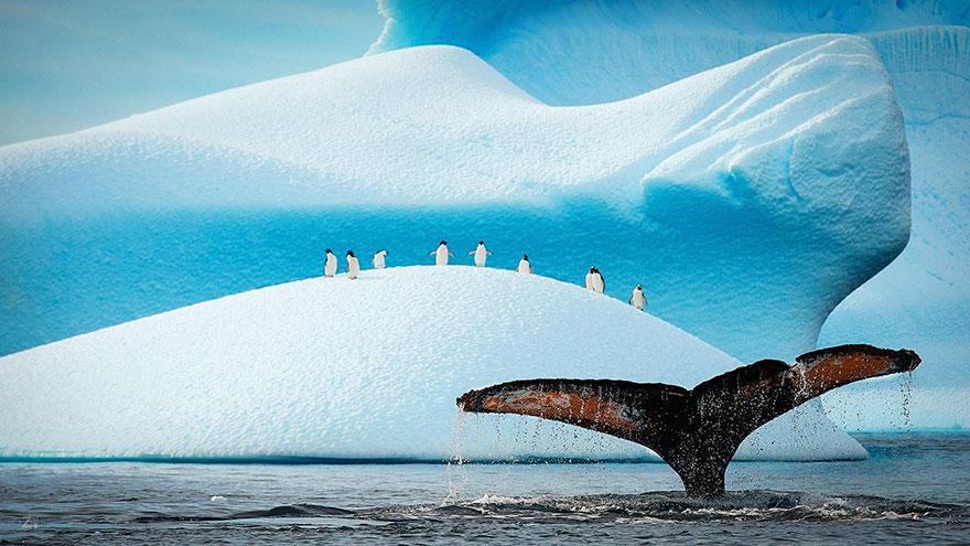 dia-concienciacion-pinguinos (41)