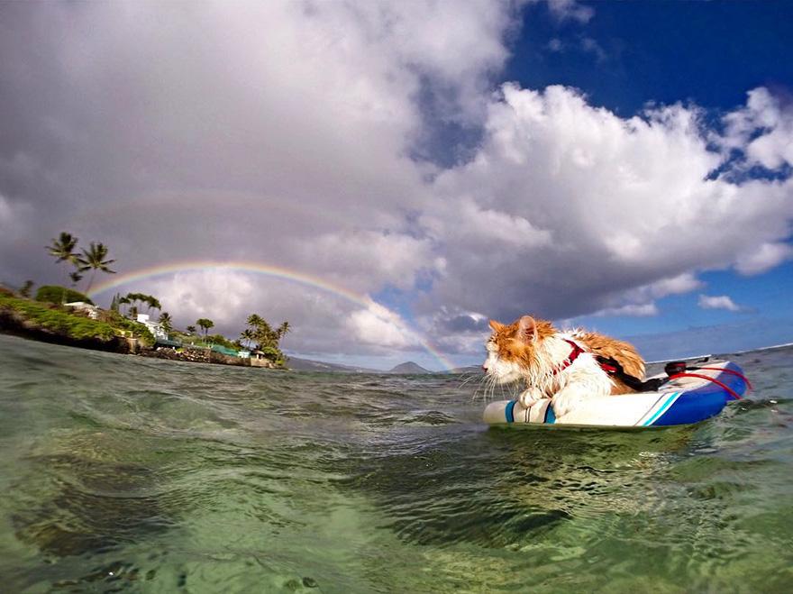 A este asombroso gato tuerto le encanta nadar y surfear en Hawai