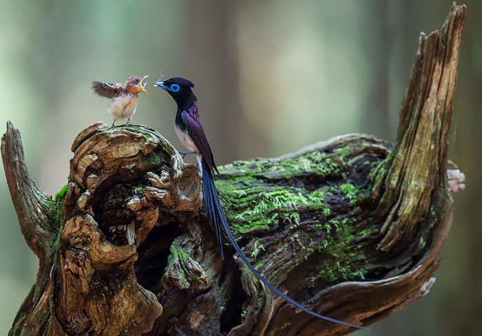 20 Aves cuidando de sus polluelos