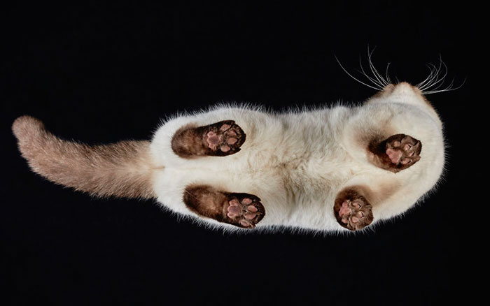 Under-cats: Hago fotos a gatos desde abajo