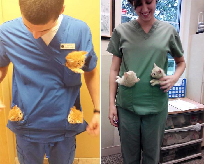 15 Beneficios de trabajar en un hospital de animales