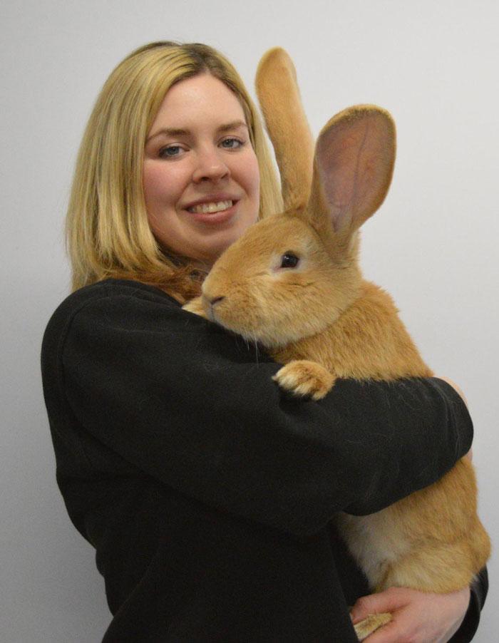 adopcion-conejo-gigante-continental-atlas-spca (3)