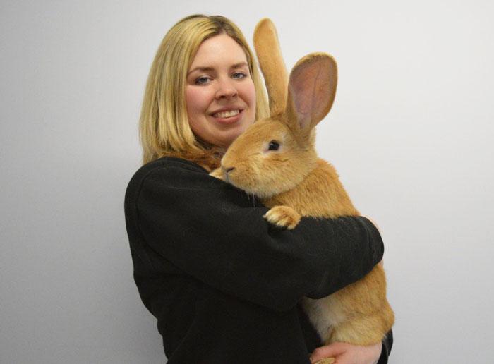 Este adorable conejo rescatado del tamaño de un perro está buscando un nuevo hogar