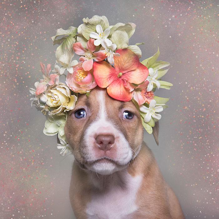 adoptar-perros-pitbull-flores-sophie-gamand (1)