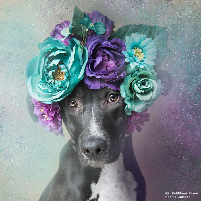 adoptar-perros-pitbull-flores-sophie-gamand (3)