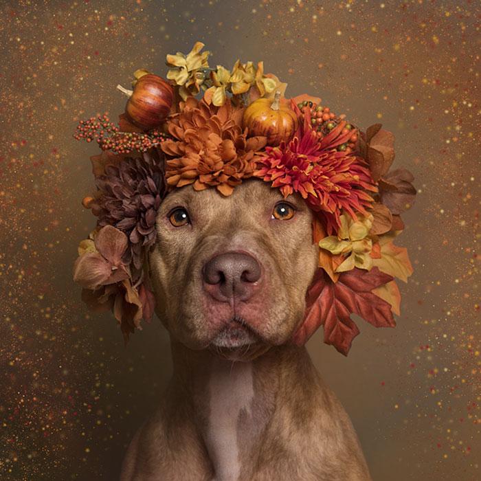 adoptar-perros-pitbull-flores-sophie-gamand (8)
