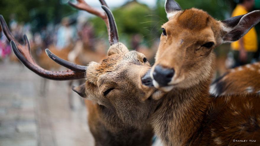 animales-besos-san-valentin (1)