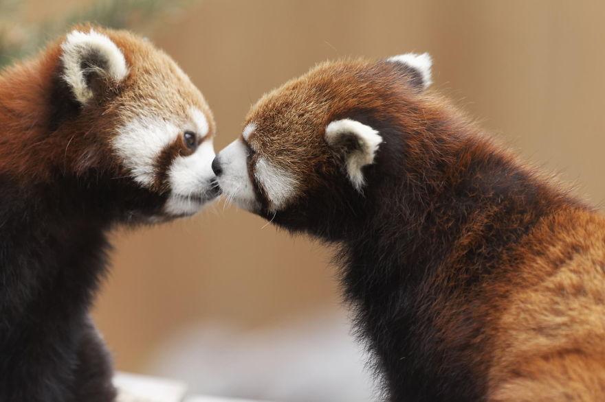 animales-besos-san-valentin (3)