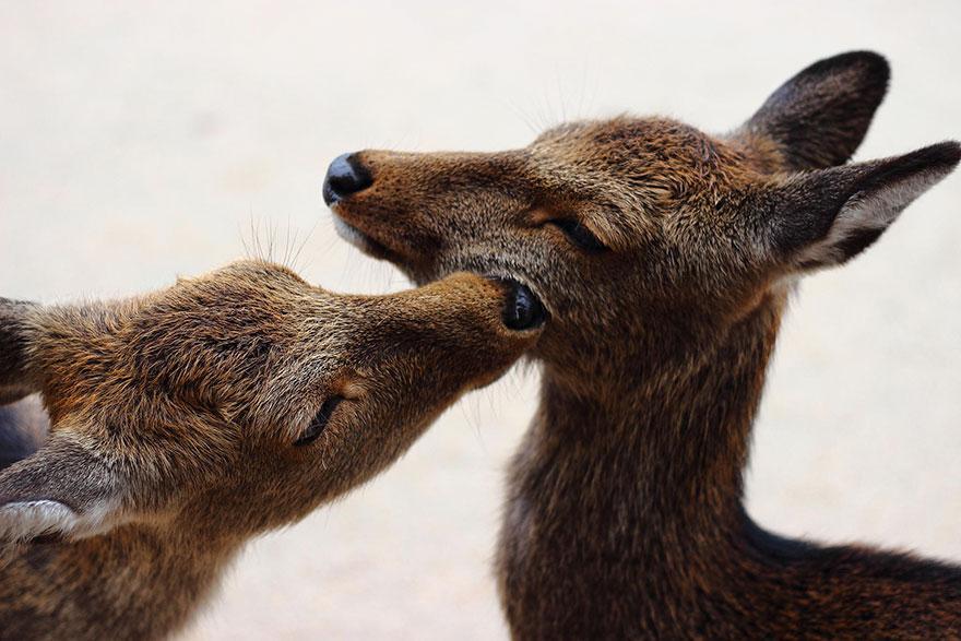 animales-besos-san-valentin (42)