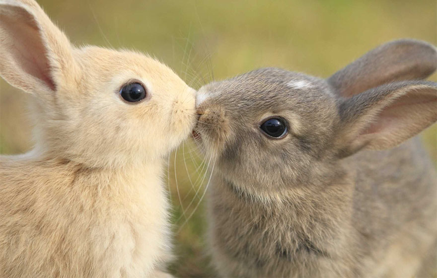animales-besos-san-valentin (48)