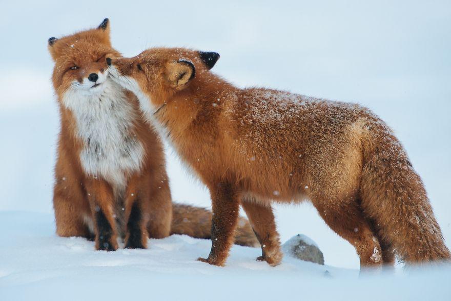 animales-besos-san-valentin (5)