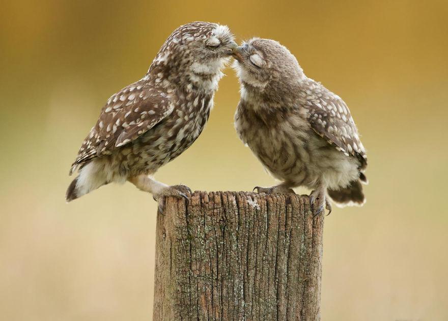 animales-besos-san-valentin (6)