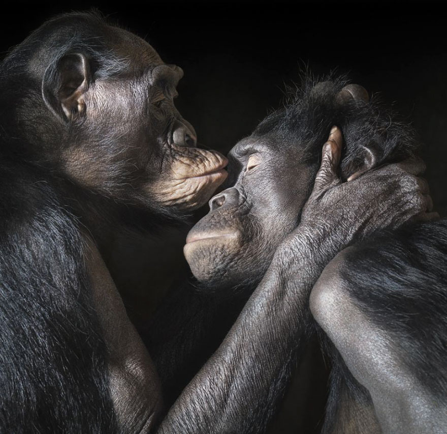 animales-besos-san-valentin (7)