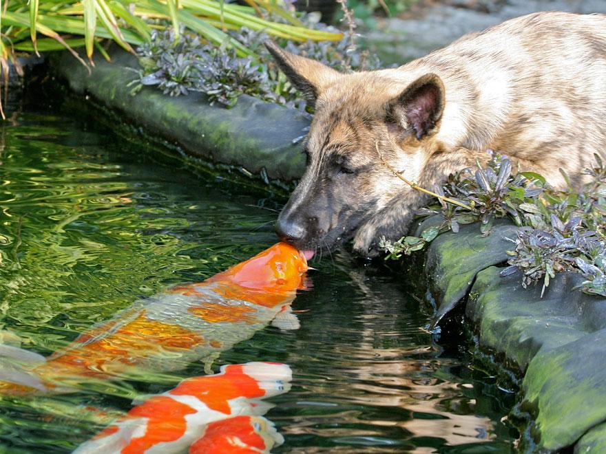 animales-besos-san-valentin (8)