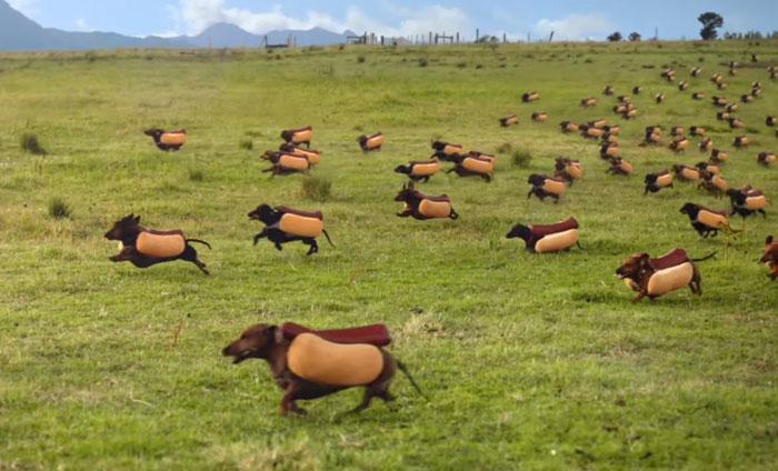 Una divertida estampida de perros salchicha en el anuncio de Heinz para la Super Bowl