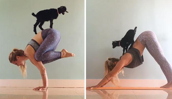 Esta yogini y su cabra son las más adorables compañeras de yoga