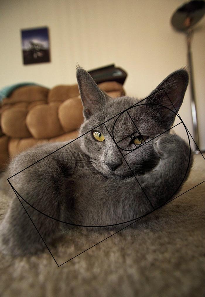 composicion-gatos-secuencia-fibonacci (2)