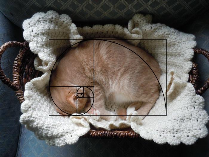composicion-gatos-secuencia-fibonacci (4)
