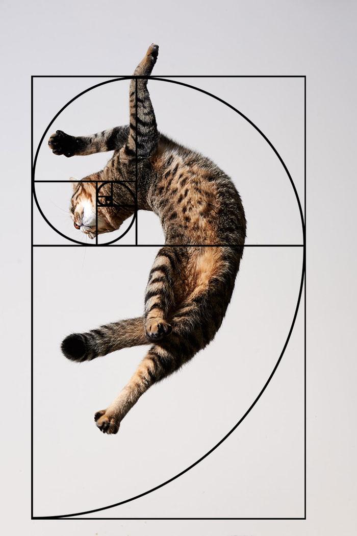 composicion-gatos-secuencia-fibonacci (9)