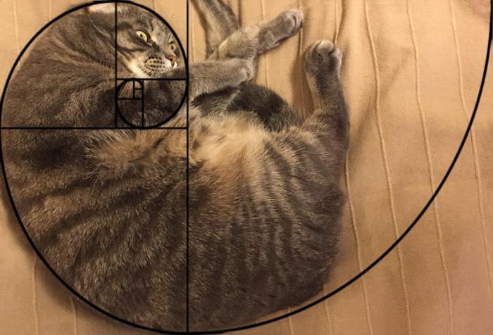 La secuencia Fibonacci demuestra que los gatos son perfectos