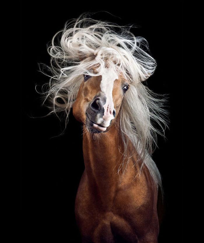 En lugar de trabajar en una oficina aburrida, seguí mi sueño y me convertí en fotógrafa de caballos