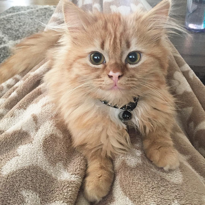 gata-adoptada-sonriente-rey (1)