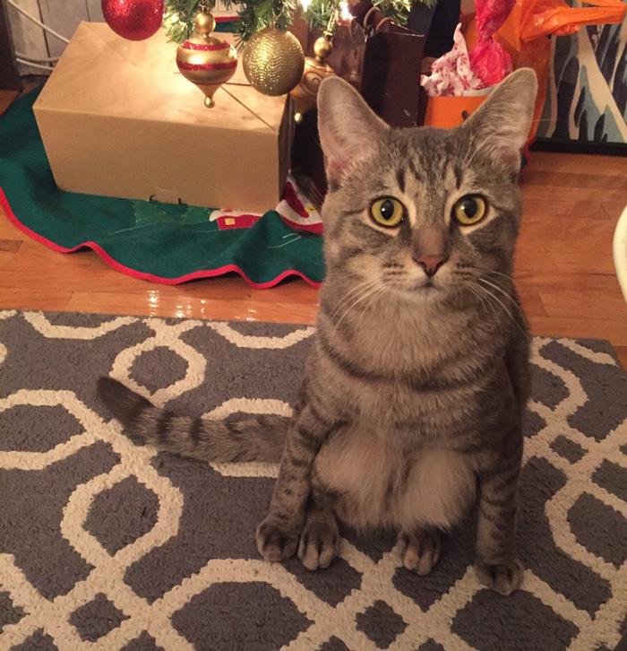 gato-callejero-adoptado-sentarse-humanos-wilbur (1)
