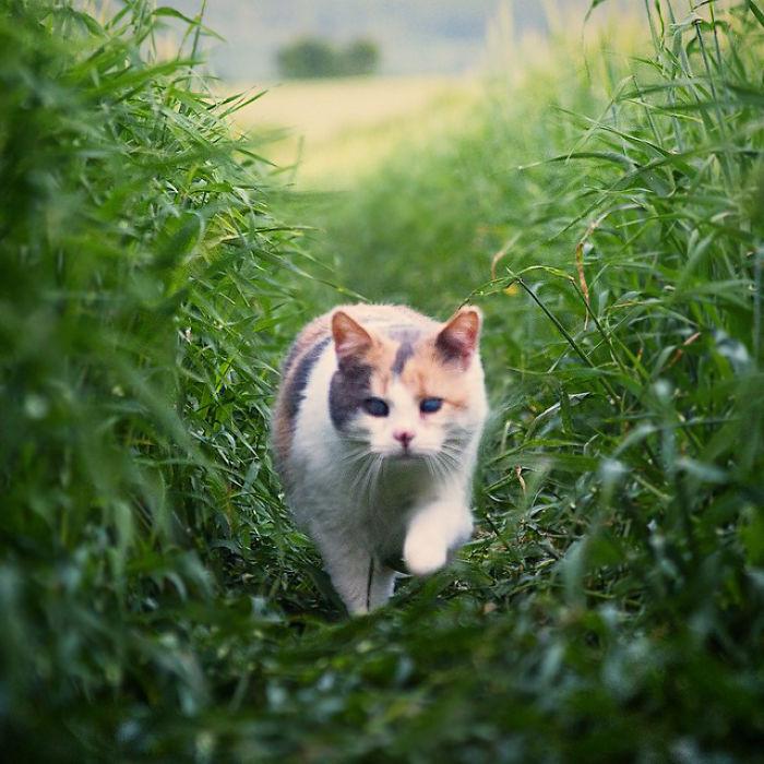 gato-ciego-rescatado-excursiones-stevie-irlanda (4)