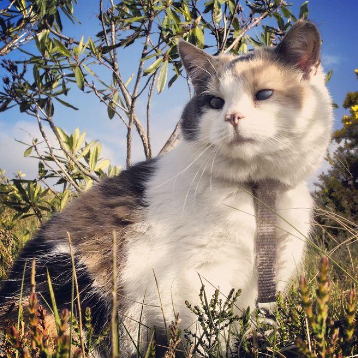 gato-ciego-rescatado-excursiones-stevie-irlanda (8)