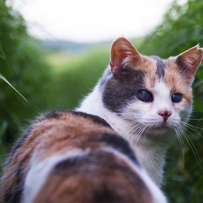 gato-ciego-rescatado-excursiones-stevie-irlanda (9)