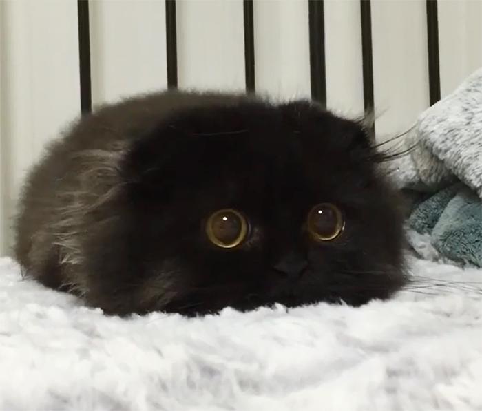 Este es Gimo, el gato con los ojos más enormes