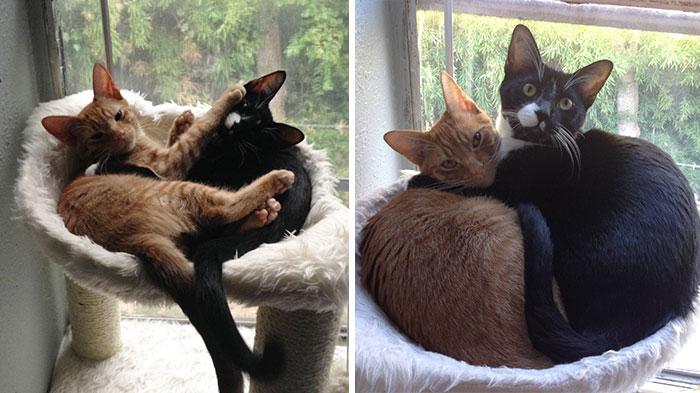 Estos hermanos gatos adoptados siguen durmiendo juntos a pesar de habérseles quedado pequeña la cama