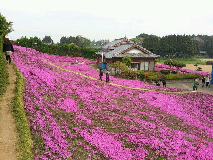 marido-planta-flores-esposa-ciega-kuroki-japon (1)