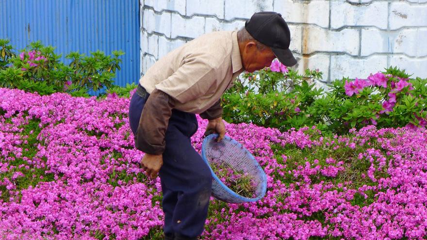 marido-planta-flores-esposa-ciega-kuroki-japon (3)